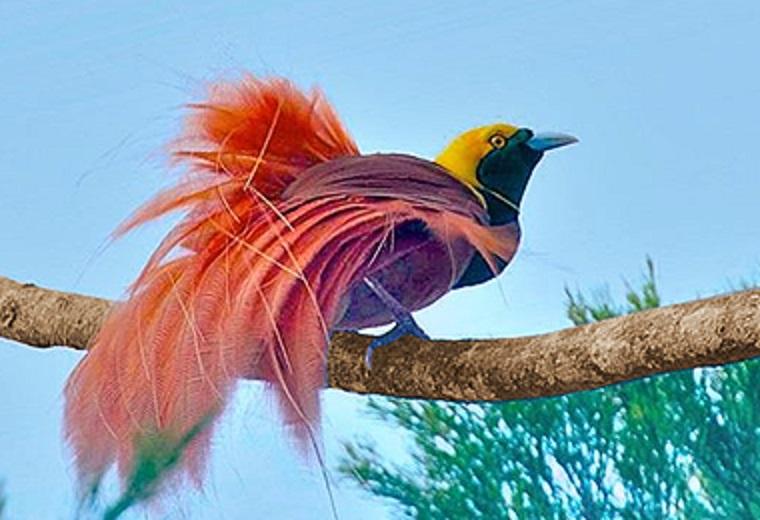 Rajska ptica