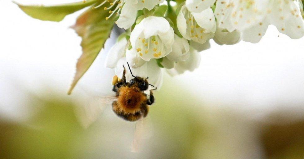 Međunarodni je dan biološke raznolikosti i Dan zaštite prirode u Hrvatskoj