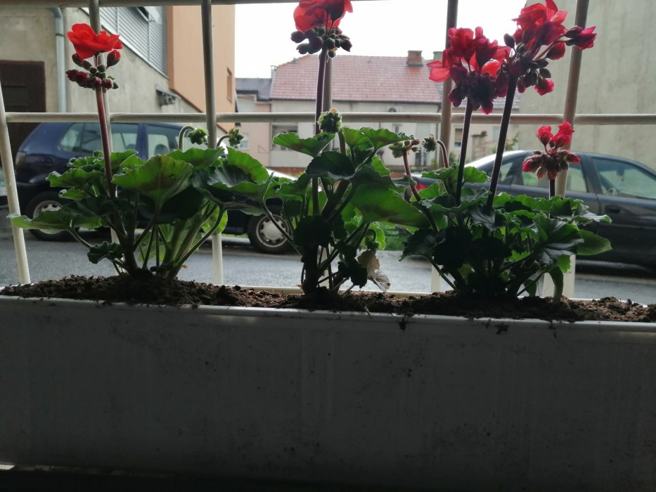 Vrtlarenje u podrumu...