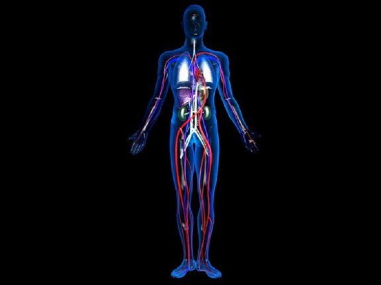 Anatomija ljudskog tjela