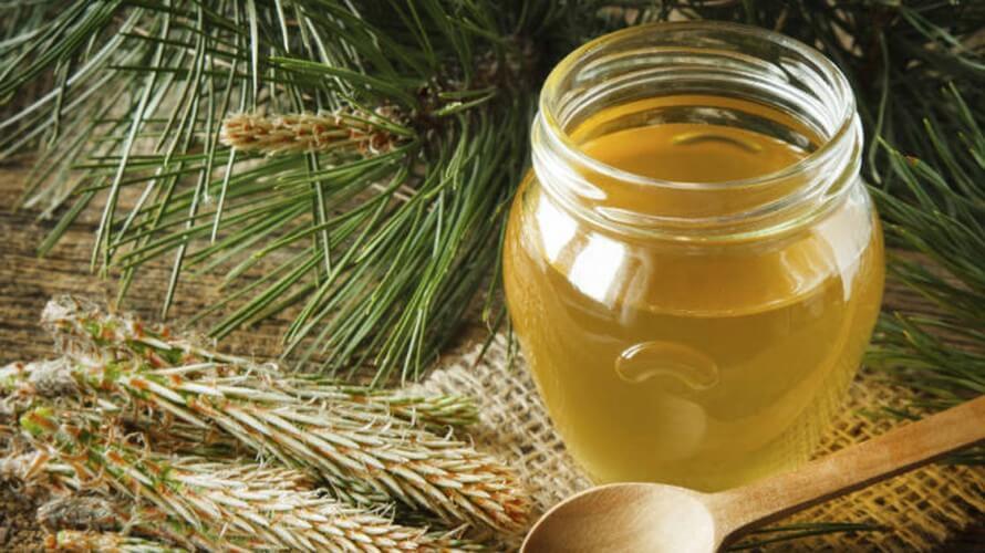 Med ili sirup od borovih iglica – ljekovitost i recept