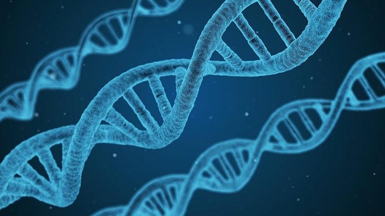GENETSKE MANIPULACIJE – Inženjering katastrofe