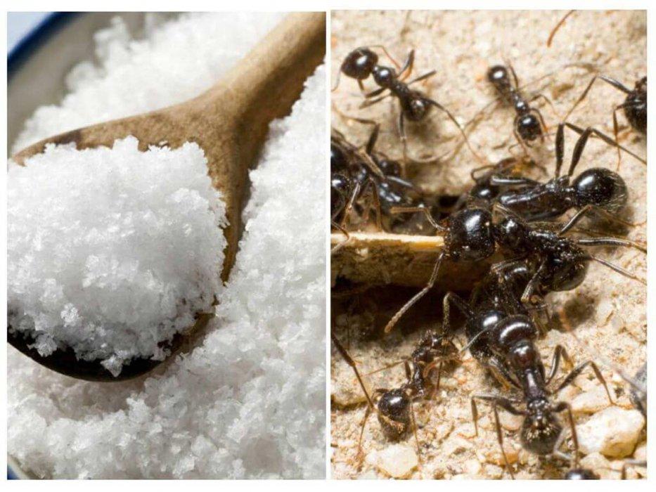 Šest najboljih prirodni pripravaka protiv najezde mrava u kući