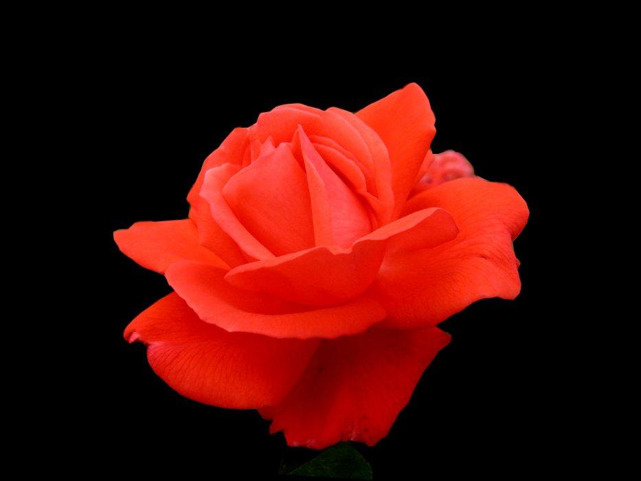 Život je kao cvijet ...