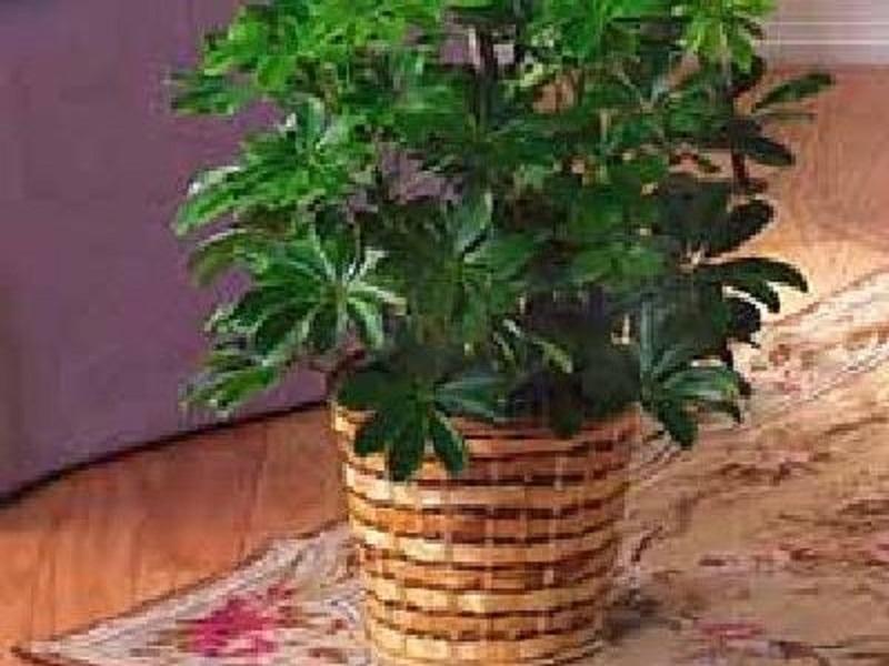 Unesete li biljke u radni prostor, neće vam trebati ovlaživači zraka