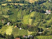 sveta jana - vinograd