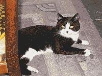 mačak 1