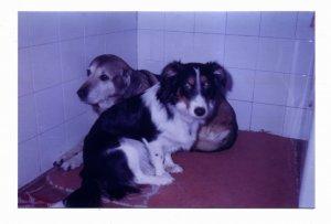 Šuška i Lorki