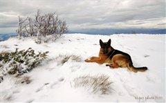 Snijeg - pas na snijegu