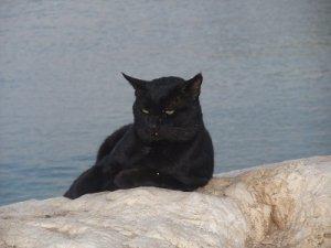 crna maca