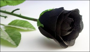 crna ruza