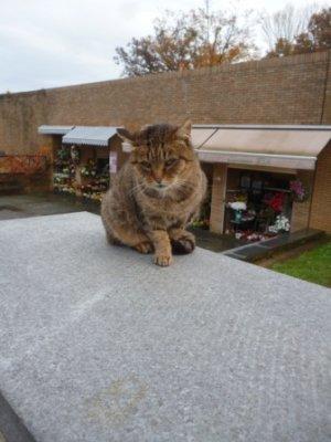 mačak krematorij