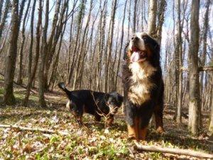 psi u šumi