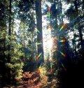 Odraz Svjetlosti
