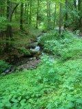 Doživjeti kišnu šumu