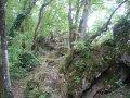 Šuma ljubavi