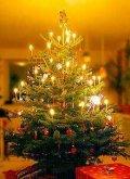 Božićno drvce