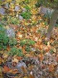 suho lišće