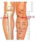 Zu San Li - Točka dugovječnosti, ili točka od stotinu bolesti na vašem tijelu
