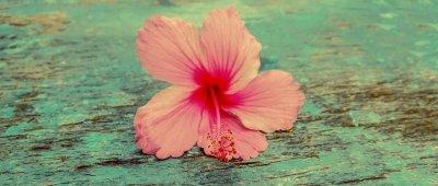 Kako čaj od hibiskusa čuva zdravlje?