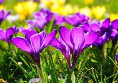 Proljeće, KORONA, ostani doma, poruke zdravstva i politike, utišane vođe religija