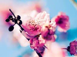 Proljeće je