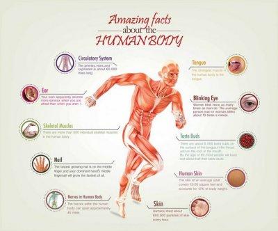 Deset najluđih činjenica o tijelu