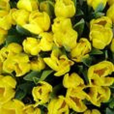 Uoči cvjetnice