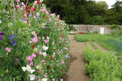 Uređivanje vrta i okućnice u lipnju