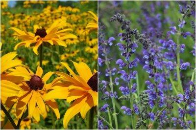 Pomoć iz prirode: Ove biljke na prirodan način pomažu da otjeramo komarce i uživamo u ljetu