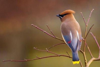 Jezik ptica