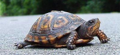 Od sad ću jest Nutellu i živjet ko kornjače...-:)