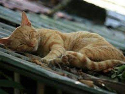 mačka se s vrućeg  limenog krova vraća umorna -  kao pas...)