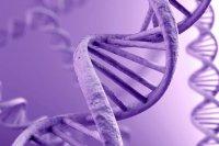 ISCJELJIVANJE DNK i unutarnje viđenje