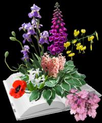 Magijske biljke