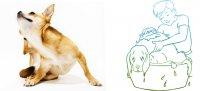 Alergije u pasa i mačaka