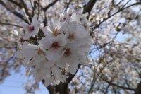 Proljeće je vrijeme bujanja - 89 dan