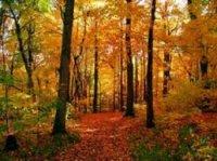 Jesenski šumski plodovi