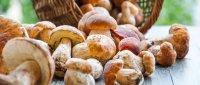 Planirate brati gljive? Svakako prije pročitajte ovih 12 savjeta