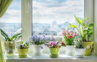 Cvijeće koje cvjeta čitave zime: Najljepše sobne biljke koje će oplemeniti vaš životni prostor