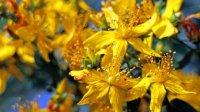 Sedam ljekovitih biljaka koje možete uzgajati sami