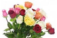 Svibanj je mjesec ruža. Koliko ruža pokloniti u kojoj situaciji? Značenje boja i broja poklonjenih ruža…