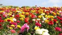 Vrtno cvijeće koje cvijeta cijelo ljeto